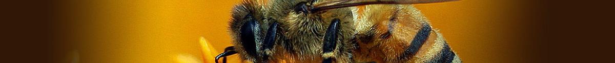 Biavlerforeningen Vendsyssel